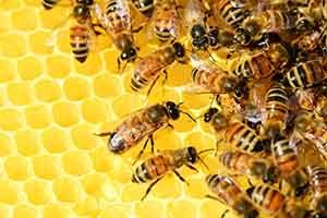 Honey bees are prevalent at construction sites in the summer months.